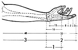 Fibonacci Corpo