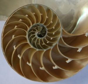 Fibonacci Animali