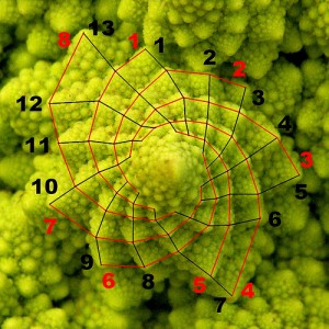 Fibonacci Piante